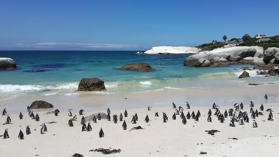 Boulders Beach – A Quaint Haven in Cape Town